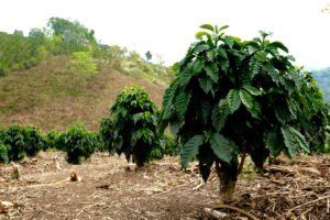 erberlingcolombia-jpg